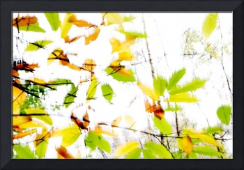 Leaves Splash Abstract 2