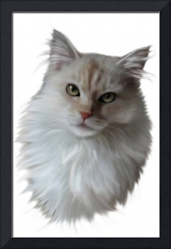 Cream Maine Coon Cat