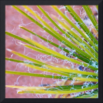 Yucca Abstract 2