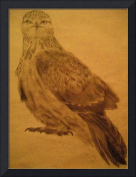 rough legged falcon (old image)