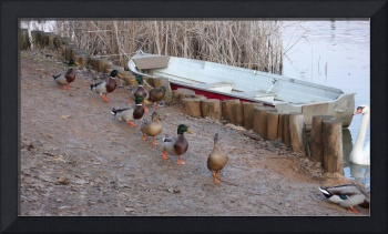 DUCKS_RIVER_LAKE