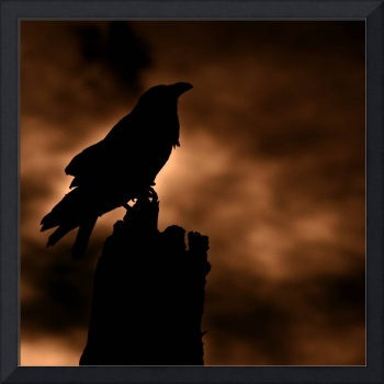 Twilight of the Crow