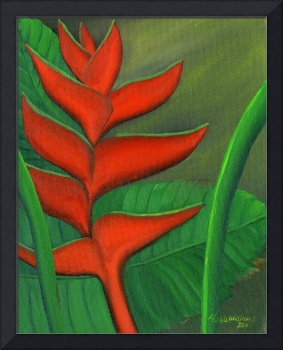 Tropical Beauty - Red and Green Heliconia
