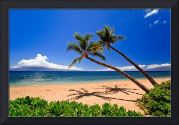 Palm trees on the beach 28374