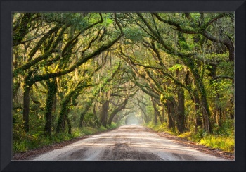 Southern Tree Lined Dirt Road of Dreams
