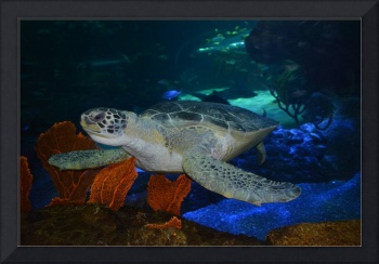 Sea Turtle Aquarium