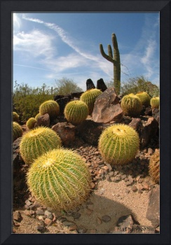 Distorted Cacti
