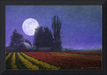 farm and tulip fields by moonlight
