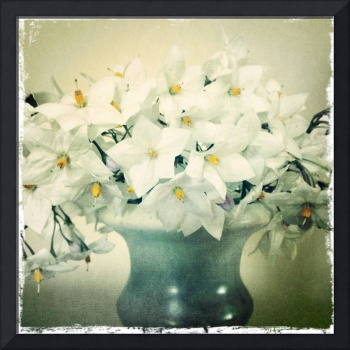 White Blossoms, Image Aged