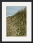Sand Dunes and Sea Grass by Jacque Alameddine