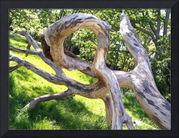Knot of Wood