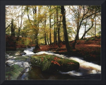 Sally Gap, County Wicklow, Ireland, Creek In Woods
