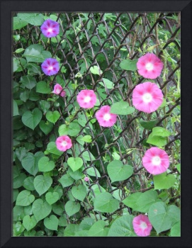 Chain link Flowers
