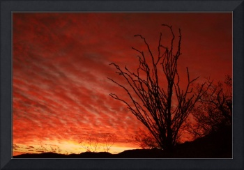 Ocotillo Sunrise over South Mountain, Phoenix