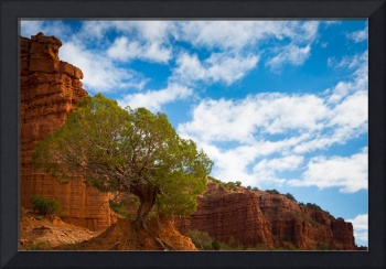 Caprock Canyon Tree