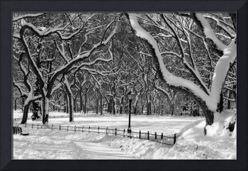 Winter Wonderland, Central Park