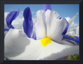Irises Iris Flowers Art 15 White Flowers Purple