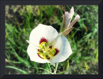 Mariposa Lily Oil Painting