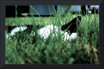Cats In the Grass: Keeping Cool