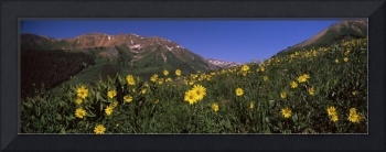 Wildflowers in a forest Kebler Pass Crested Butte