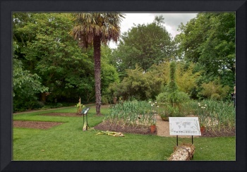 In the Physic Garden, Chelsea 49