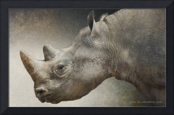 black rhino portrait