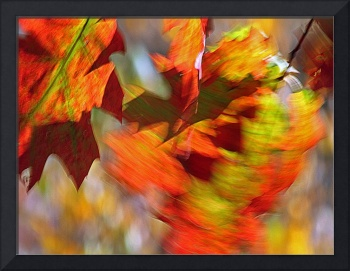 Autumn Winds Series #2