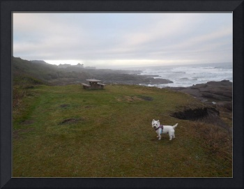 Photography Miss Daisy And The Oregon Coast