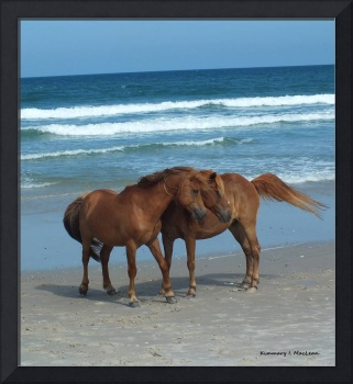 Assateague Couple