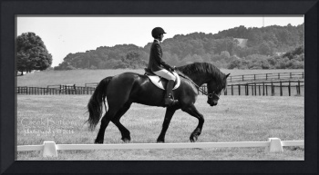 © CBp Dressage Warmup on Friesian Horse
