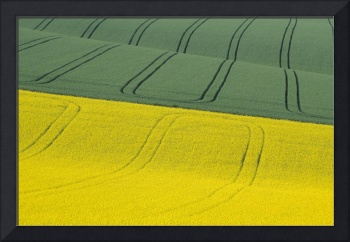 Green And Yellow Fields Wiltshire, United Kingdom