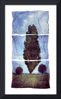 Polaroid Trees