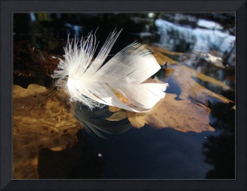 Floating Feather and Leaves