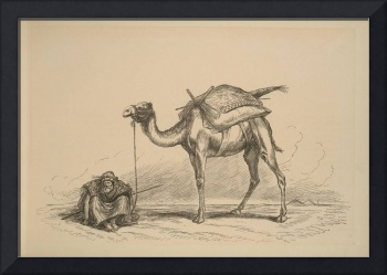 On the Nile - Alexandria - camel and resting rider
