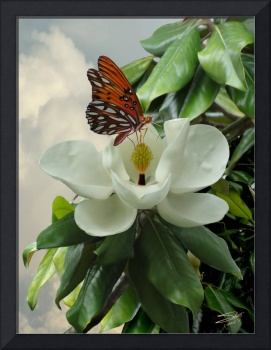 Butterfly on Magnolia Blossom