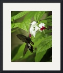Bleeding Heart & Butterfly by Rich Kaminsky