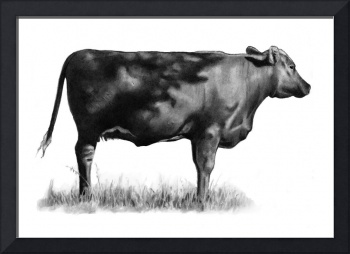 Beef Cow In Pencil