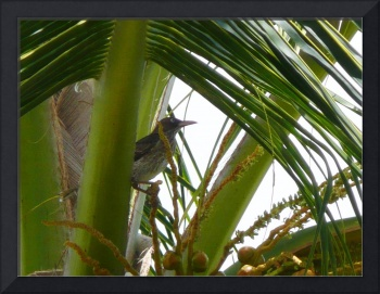 bird_in_palm