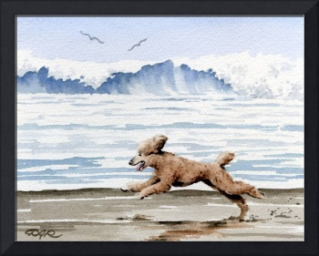 Brown Poodle at the Beach