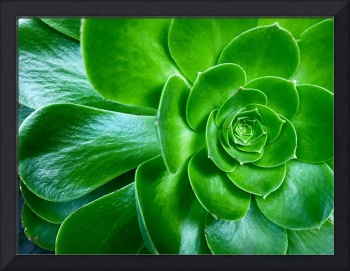 An isolated shot of a green aloe succulent plant
