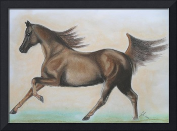 arabian stallion galloping