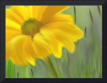 Yellow Daisy-2