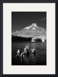 Mt. Hood over Trillium Lake by Ken Dietz