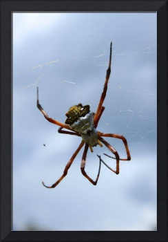 White and Yellow Orb Weaver Spider