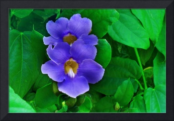 Blue Flowers on Green Leaf Background