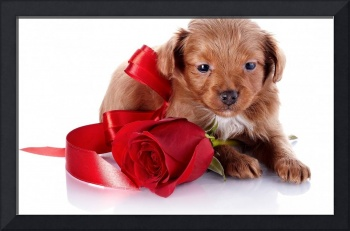 Brown Retriever Brings Roses of Love