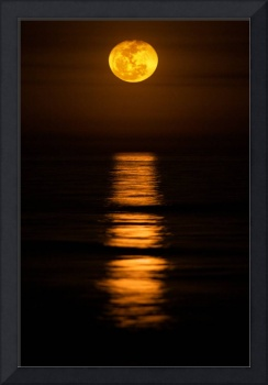 Carolina Moon by Jim Crotty