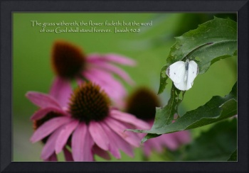 scripture grass withers- word forever