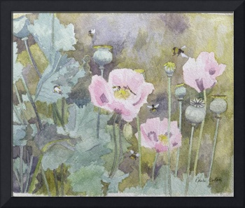Pink poppies with bees