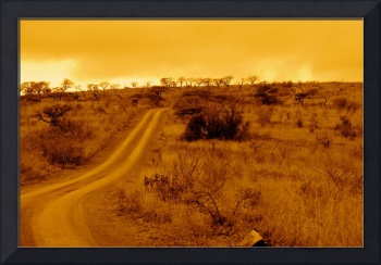 South Africa - Winding Road - Acacia Trees - Hluhl